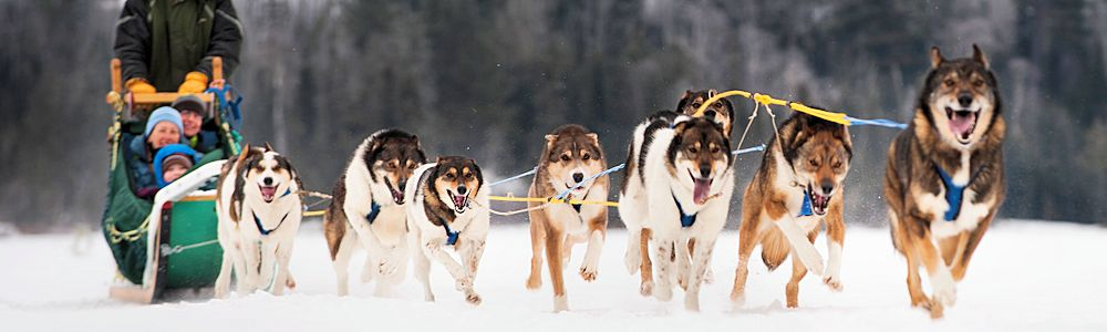 John Beargrease Dog Sled Race - Grand Marais Local Guide